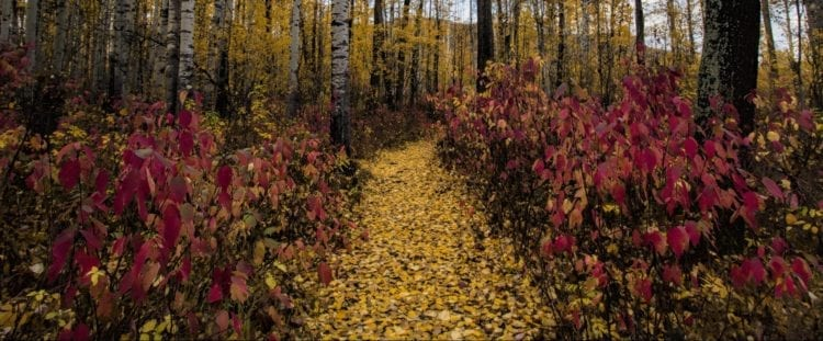 forest path 4
